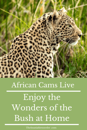 My favorite African Cams