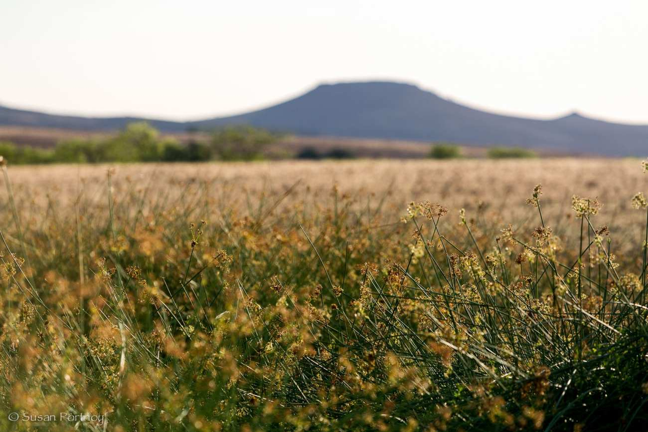 A small patch of high grass near Desert Rhino Camp in Namibia
