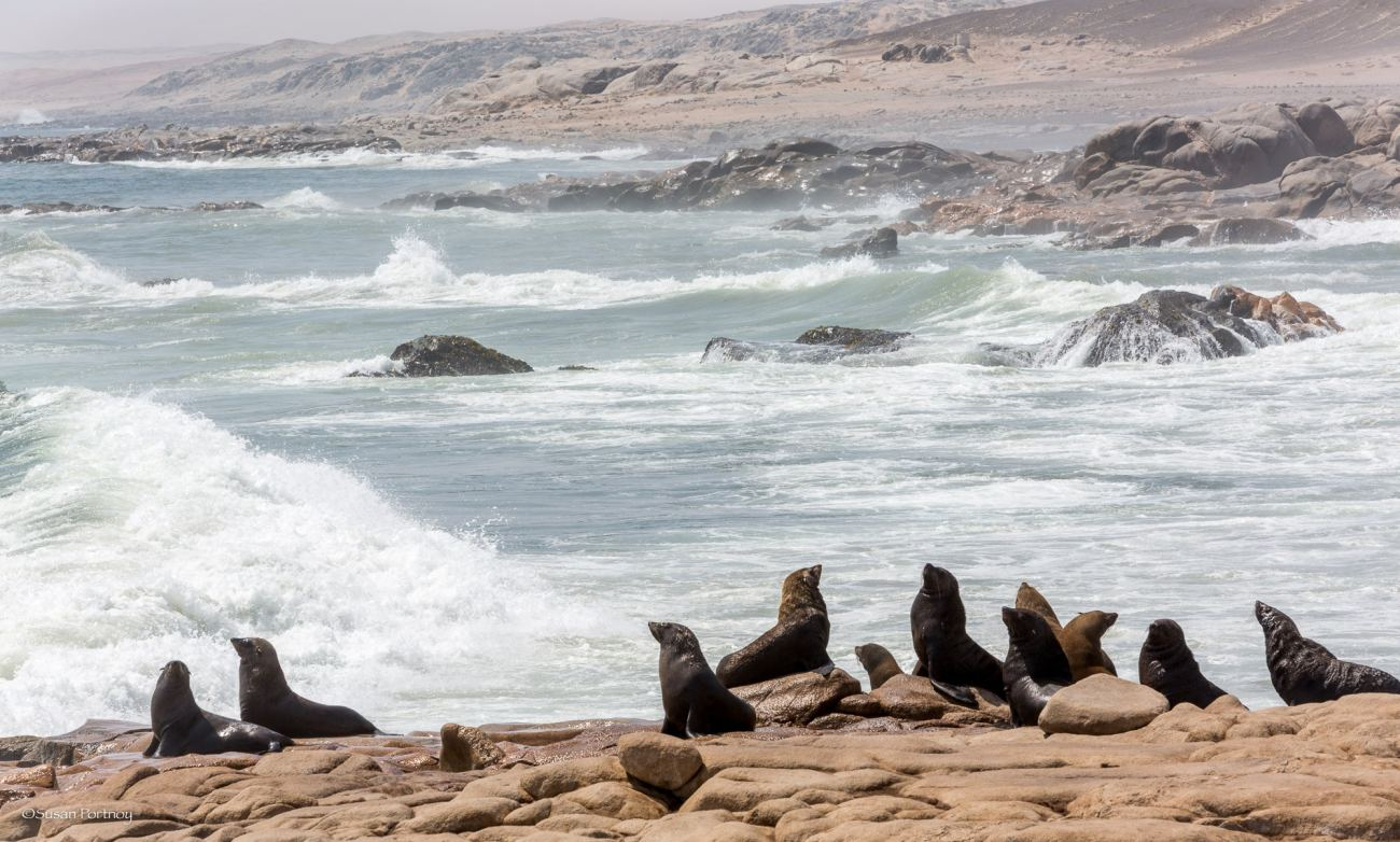 Seals on the shore of the Skeleton Coast