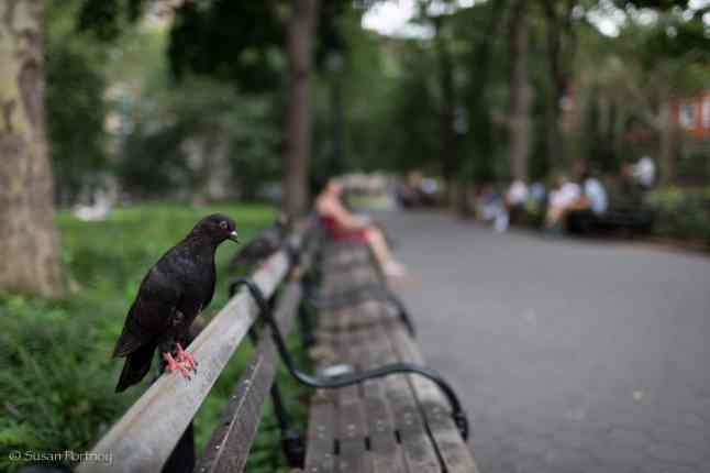 Hanging on the bench waiting for #LarrythePigeonMan to bring him some seeds