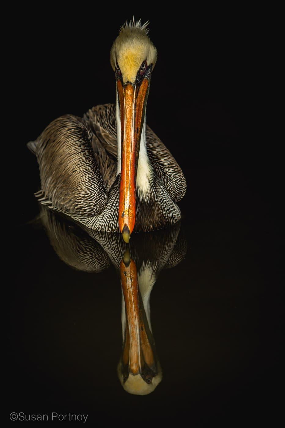 sportnoy_birds-03