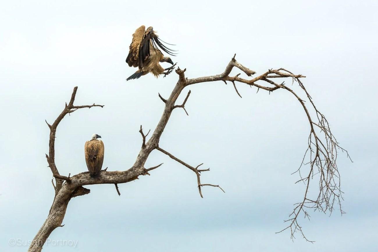 sportnoy_birds-12
