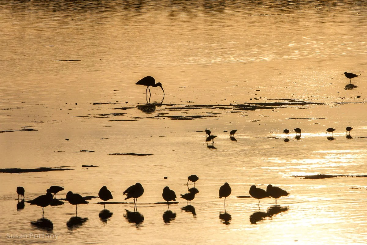 Silhouettes of birds - Best Guide to the Ding Darling Wildlife Refuge on Sanibel Island-100201