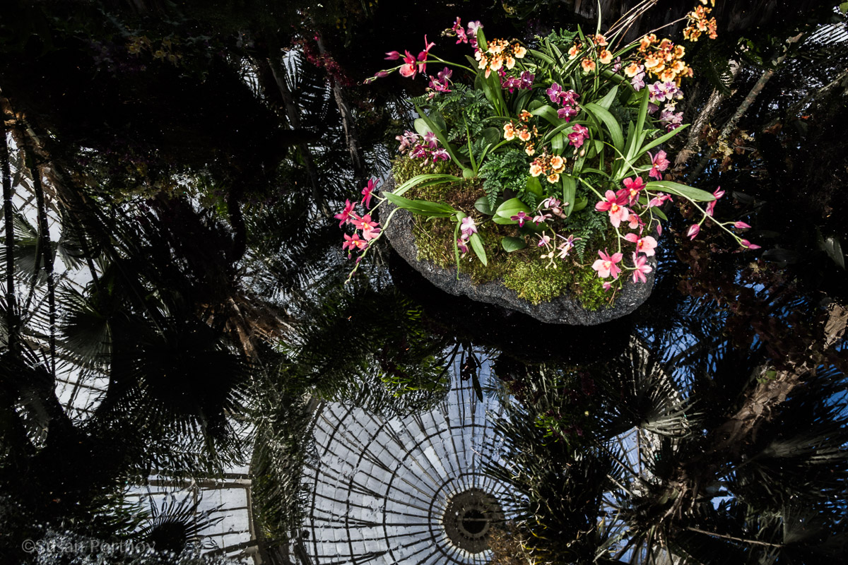 Orchids and a reflection of the NY botanical Garden Conservatory
