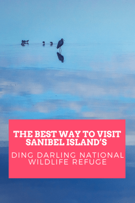 The Best Way to Visit Sanibel Island_s