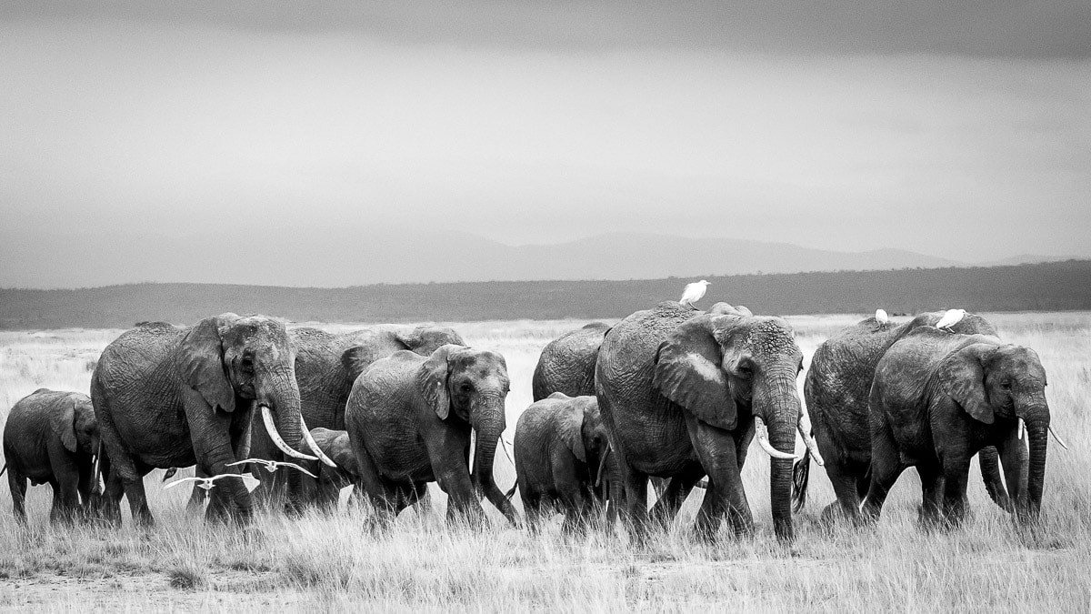 World Elephant Day 2017 -SPortnoy_20140618_0390-Edi.Print