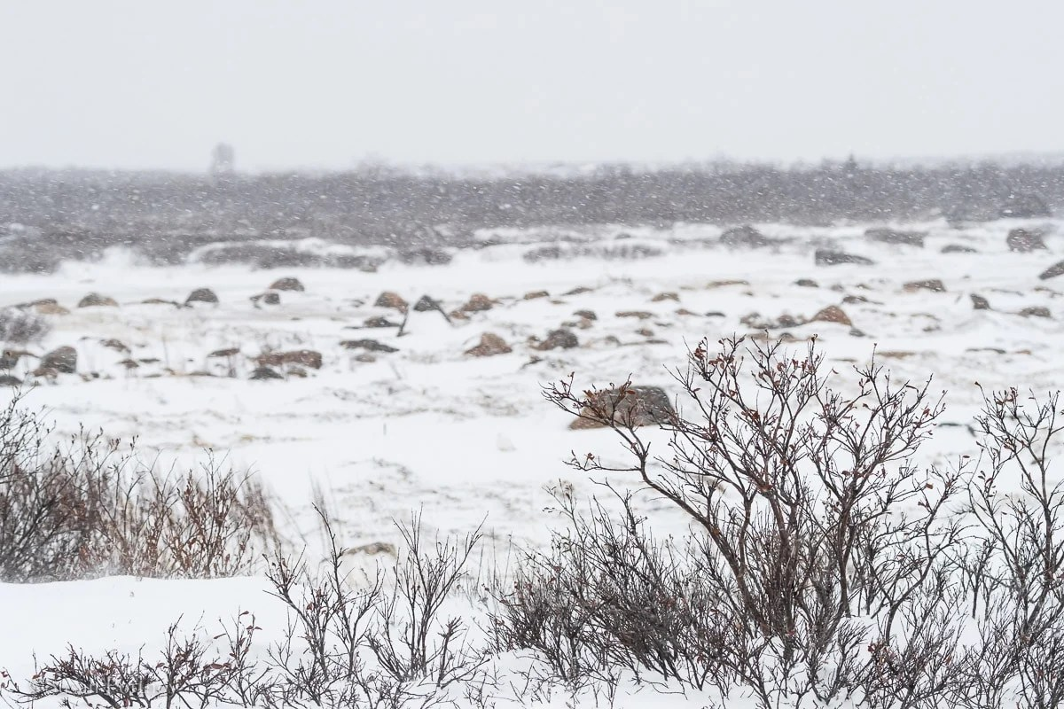 The frozen tundra near Seal River Heritage Lodge | What it's like to be on Canada's only Walking Polar Bear Photo Safari