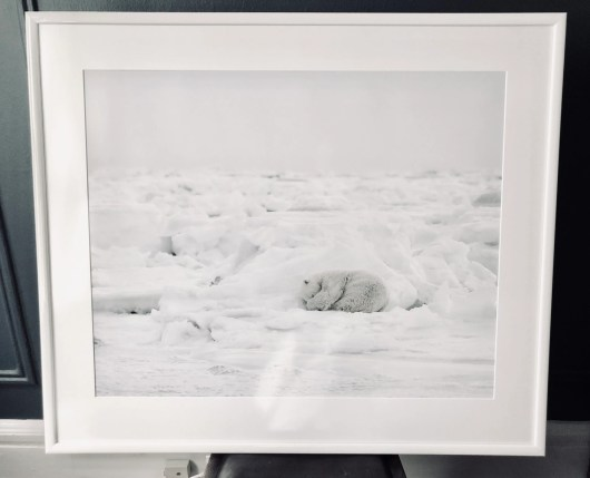 Susan Portnoy The Insatiable Traveler framed photo of polar bear
