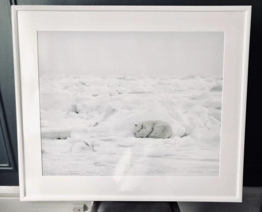 Susan Portnoy The Insatiable Traveler framed photo of polar bear