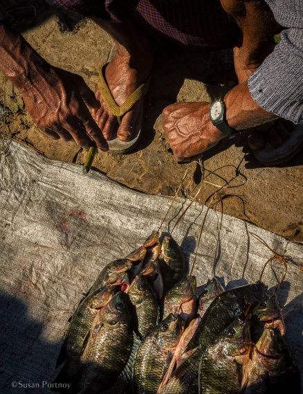 A fisherman sells his catch of the day at a market on Inle Lake.