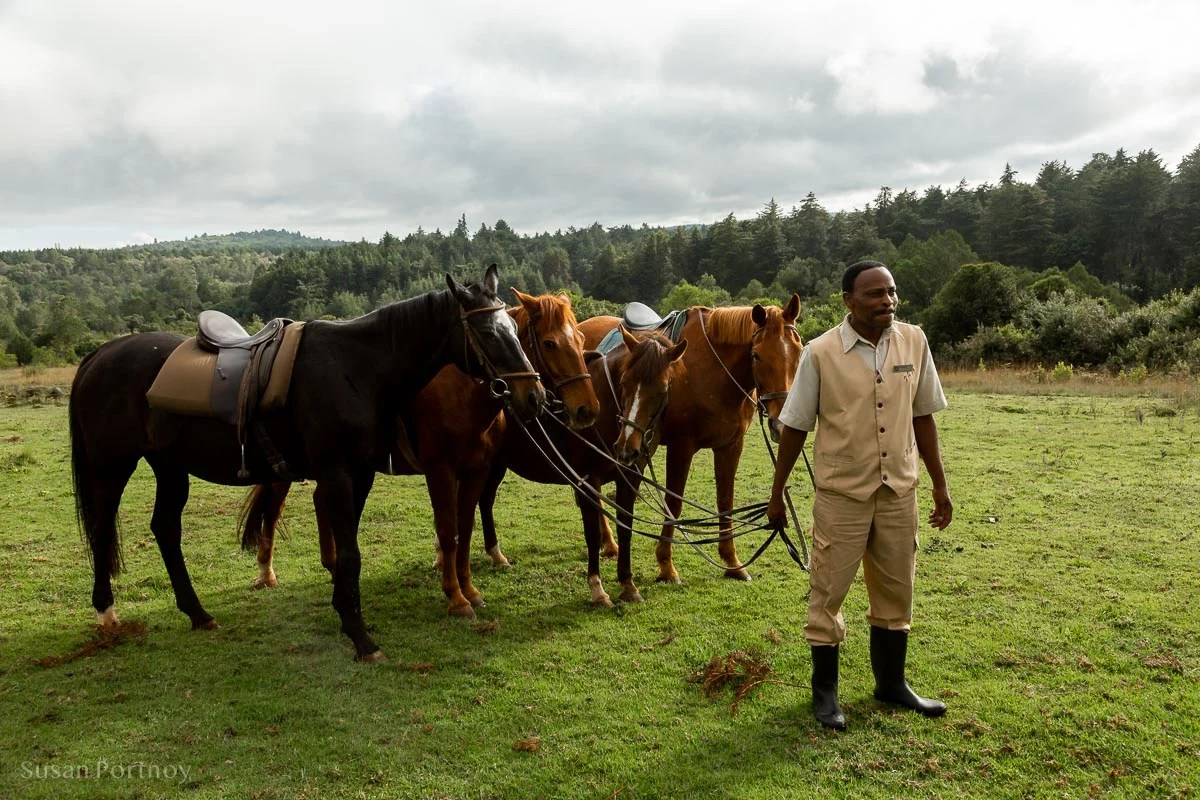 Horses at the Mount Kenya Safari Club - How to Experience More Beyond Kenya's Big Five -7507