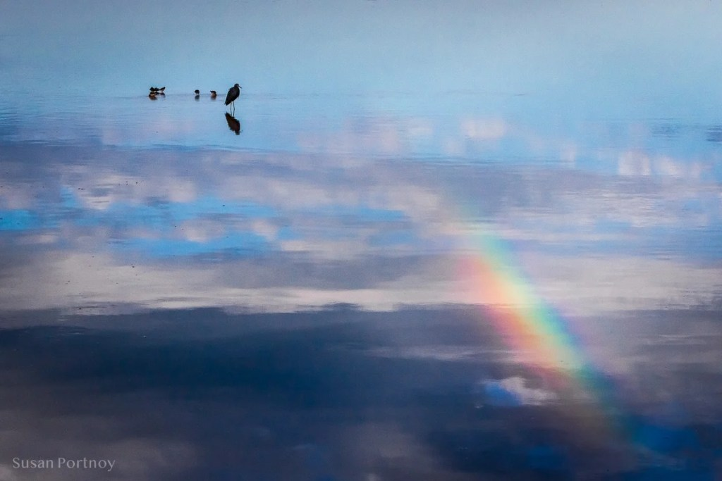 silhouette of birds and rainbow --Best Guide to the Ding Darling Wildlife Refuge on Sanibel Island