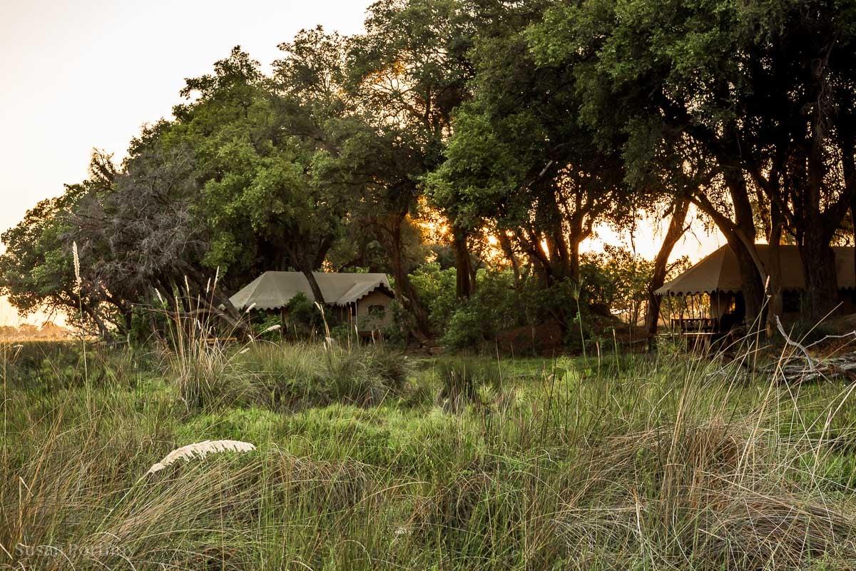View from the boardwalk at my tent on the far left - Duba Explorers Camp Okavango Delta Safari Botswana