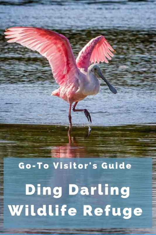Ding Darling Wildlife Refuge Go-To Visitor's Guide
