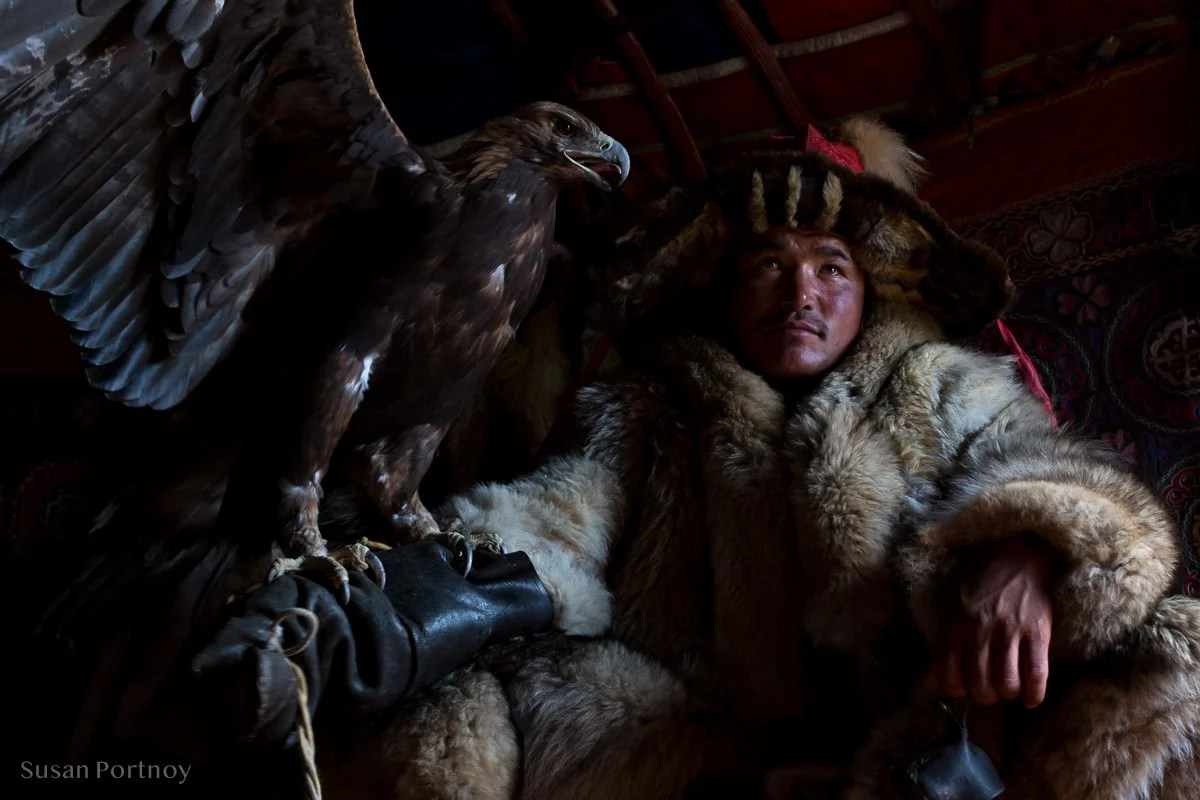 Sitting portrait of a Kazakh eagle hunter with his golden eagle flapping it's wings and wearing traditional winter fur coat and hat, Altai Mountains, Mongolia