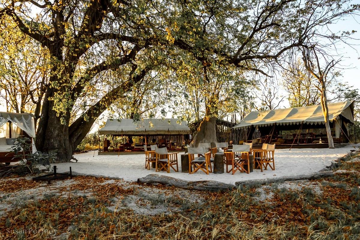 Selinda Explorers Camp- Botswana Safari -301-2