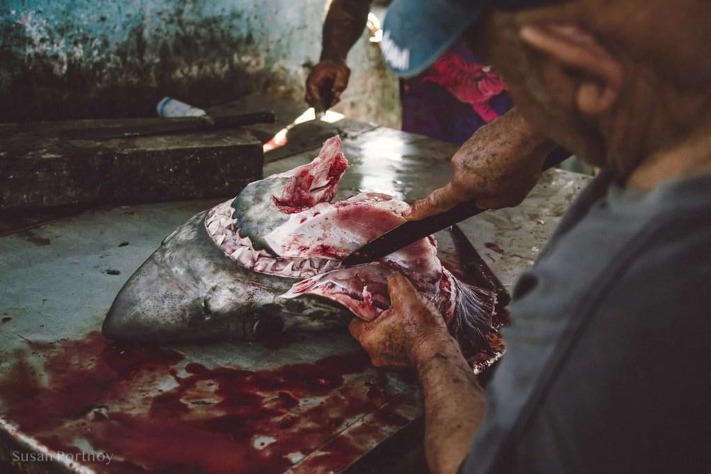 Cutting up a shark head in Cojimar