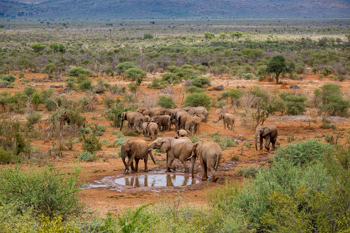 View of the watering hole from the deck of the Molori Safari Lodge