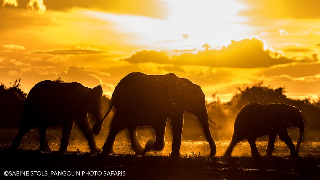 Elephants in Silhouette Photo: Sabine-Stols - African Photo Safaris