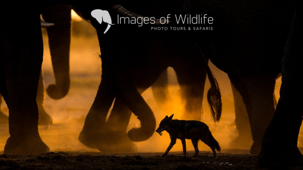Images of Wildlife - Andy and Sarah Skinner