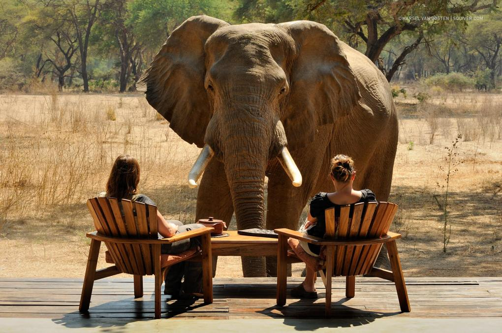 An elephant stands in front of two guests in Zambia