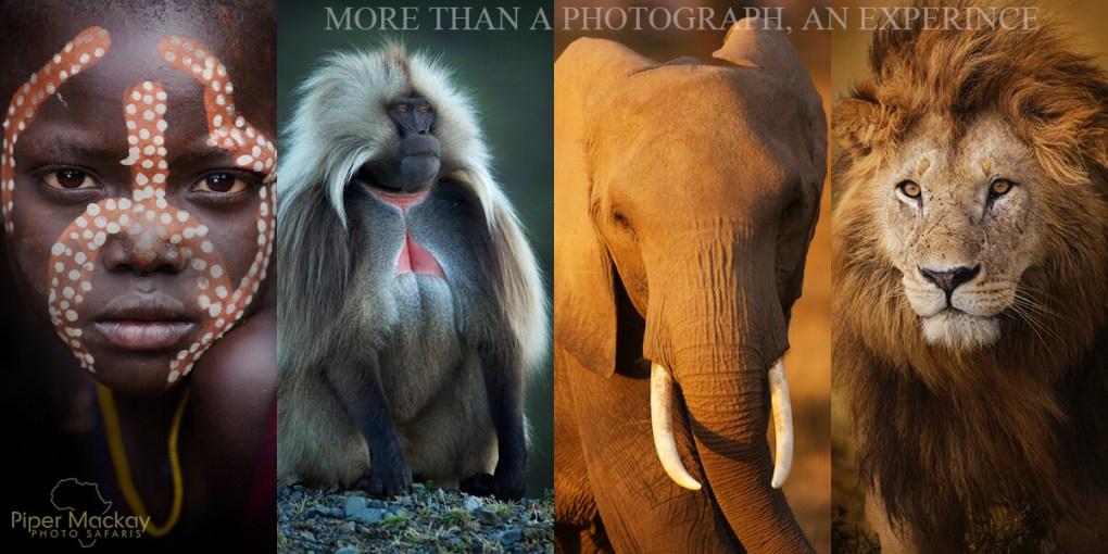 Piper Mackay Photography - African Photo Safaris