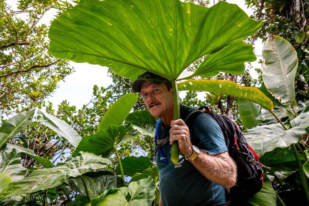 """Crocodile James"" Johson, guide and trail manager on Saba Island"
