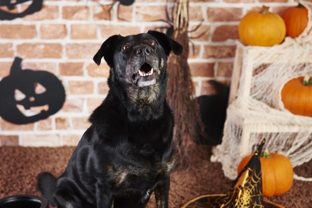 Addressing Excessive Dog Barking