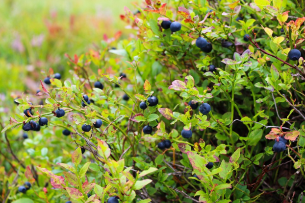 7 of the Finest Fruits to Grow in Your Garden
