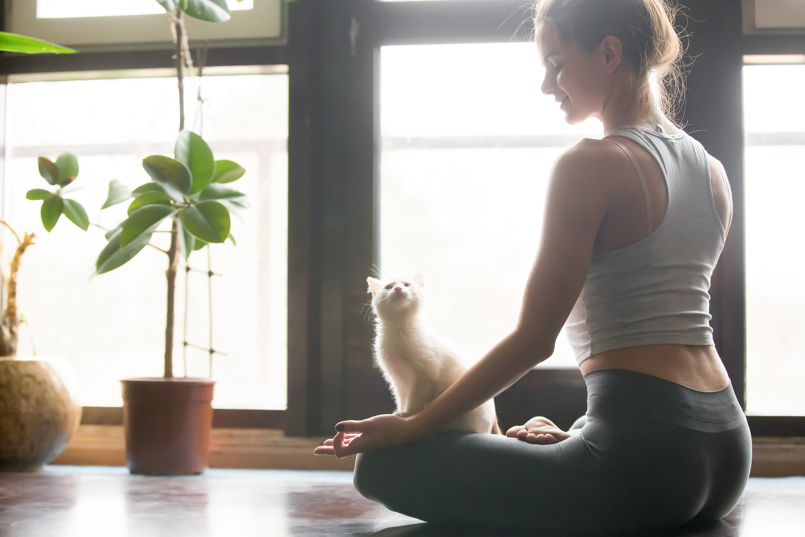Yoga and your cat – the purrfect combination!