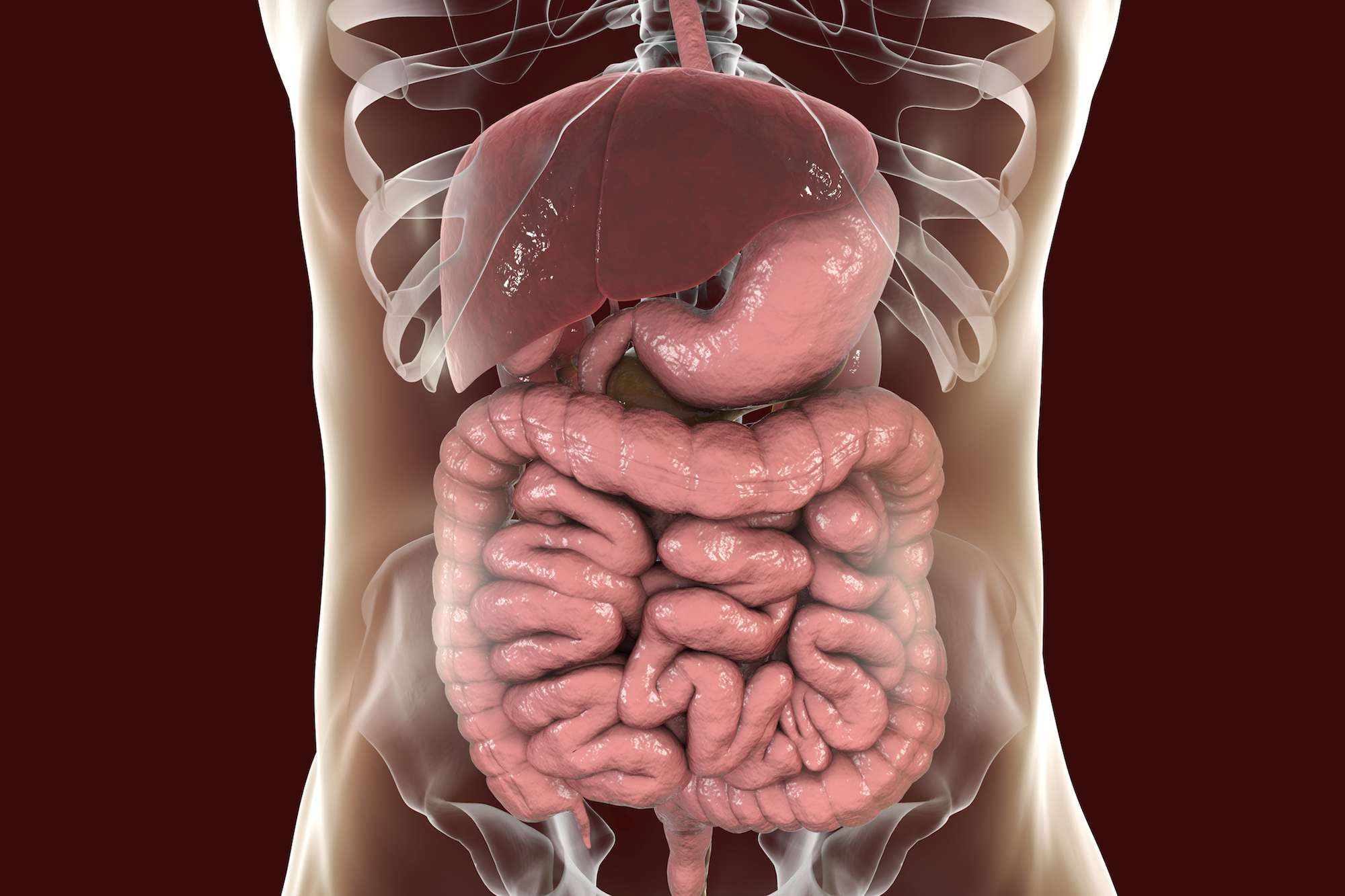 The Most Common Disorders Of The Gastrointestinal Tract