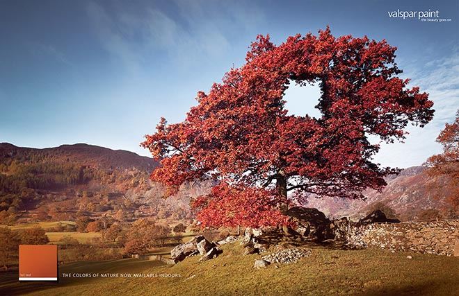 Red leaved tree in Valspar print ad