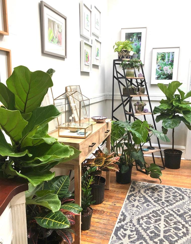 plants and displays in The Inspired Garden's Maplewood studio