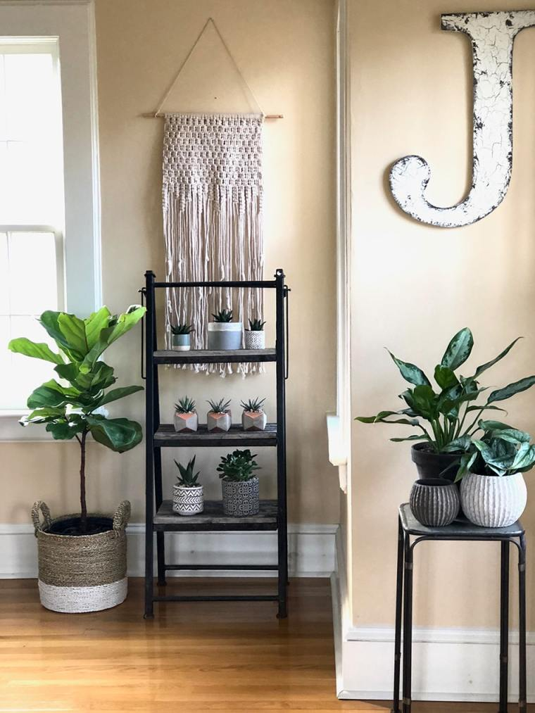 indoor botanicals example by Inspired Garden Maplewood New Jersey
