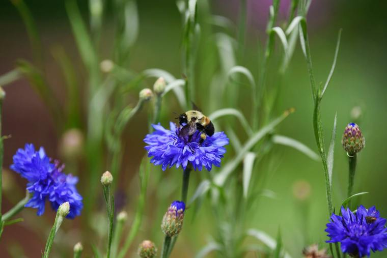 bee on flower from Magic Garden Client Story slideshow