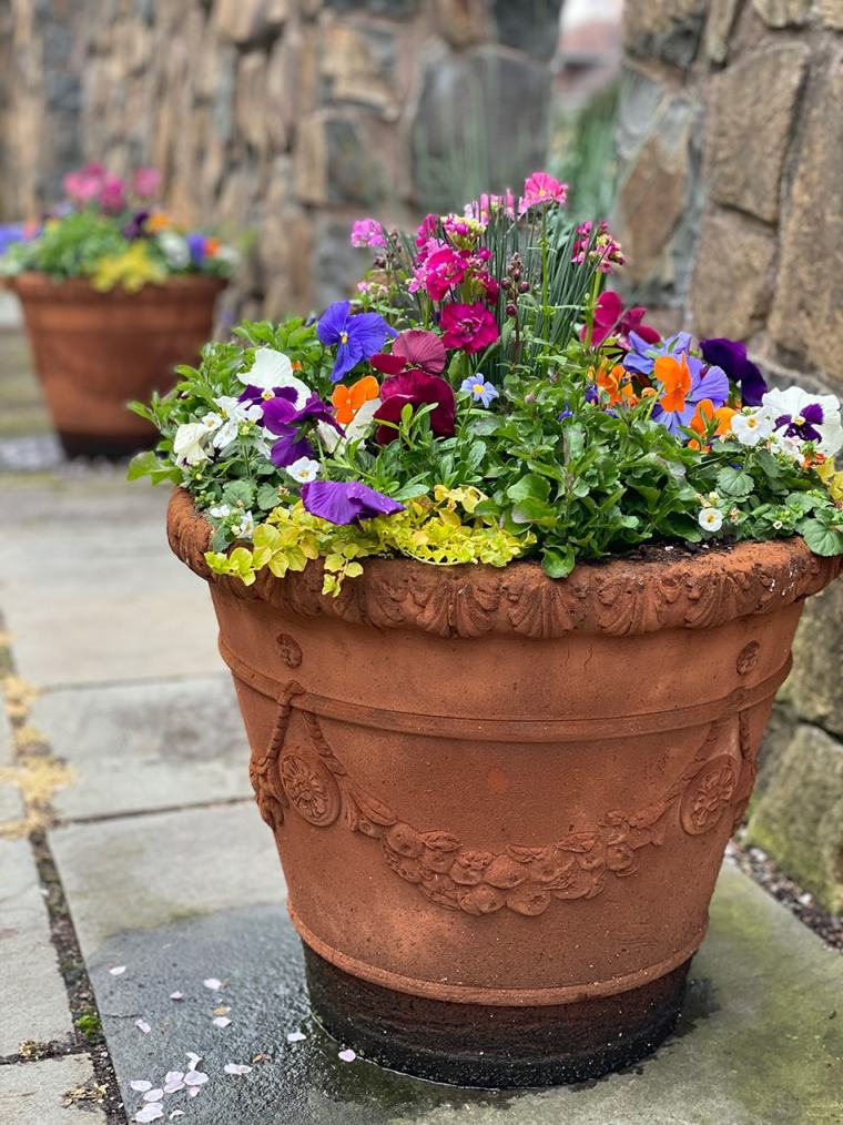 early spring container garden gallery addition august 2020