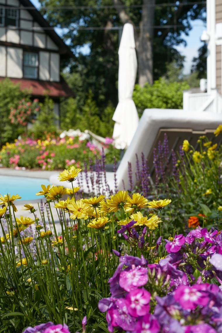 flowers by pool for home garden gallery addition august 2020