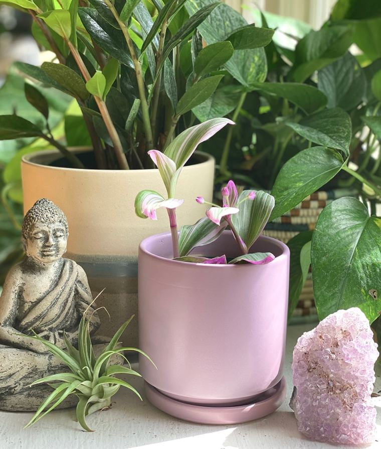 indoor botanical plants with Buddha statue for slideshow