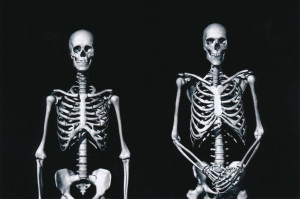 Exhibit-389-Graphic-Skeletons-1024x680