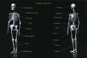 Exhibit-400-Graphic-Showing-Bones-Found-in-Burn-Pit-1024x686