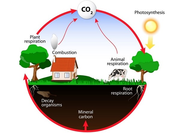 2.2 carbon_cycle