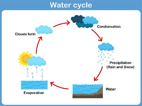 2.4 Water cycle