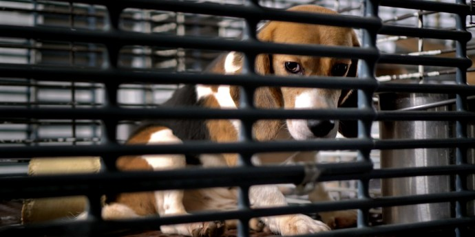 This Week: Inside the Barbaric U.S. Industry of Dog Experimentation 1