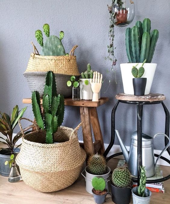 The Ultimate Guide to Houseplants For Your Homes - Part 1