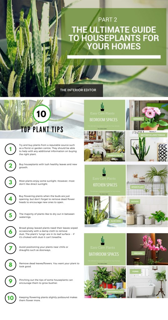 The Ultimate Guide To Houseplants for Your Home - Part 2