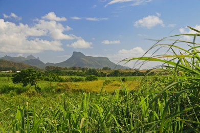 View of the magnificent Lion Mountain from one of the many Sugar Cane fields in Mauritius