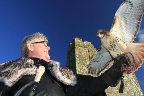 Falconry in Castle Ward