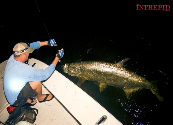 Jason Big Tarpon Mullet 1200