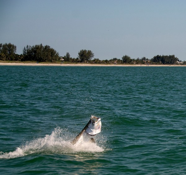 Redfish Pass Jumping Tarpon 1200