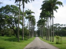 palm-tree-lining-driveway